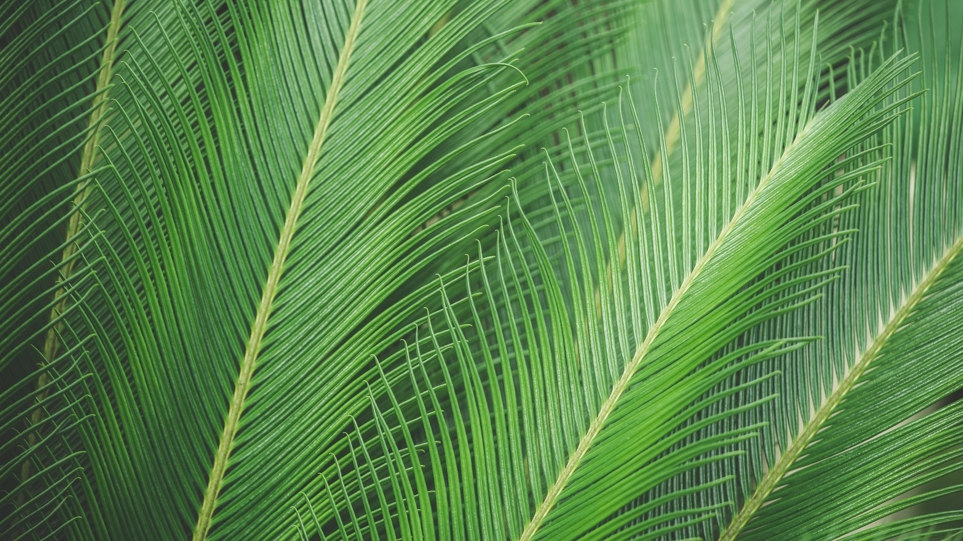 Tropical Leaf Wallpaper and Background