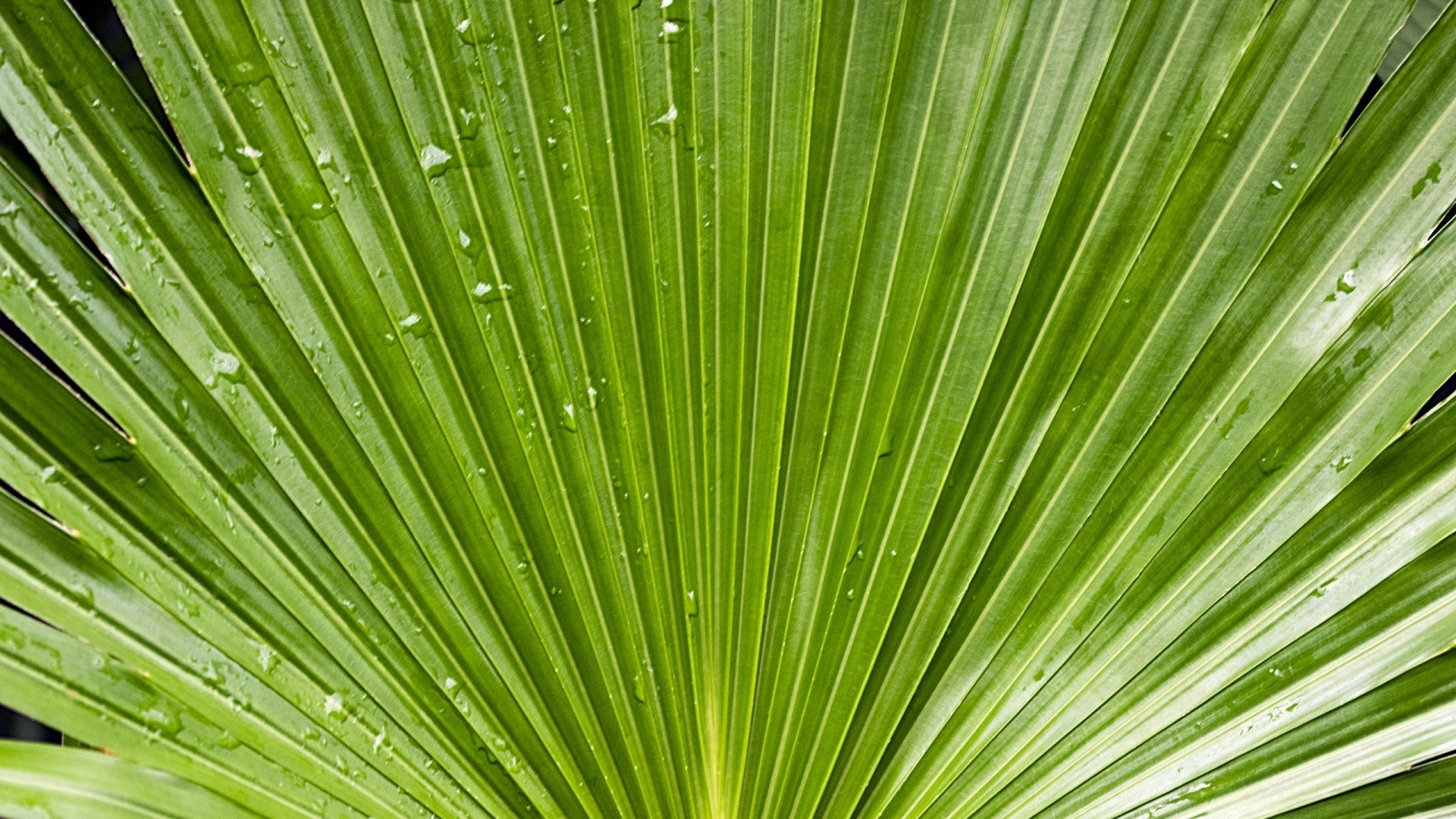 Tropical Leaf Wallpaper for pc