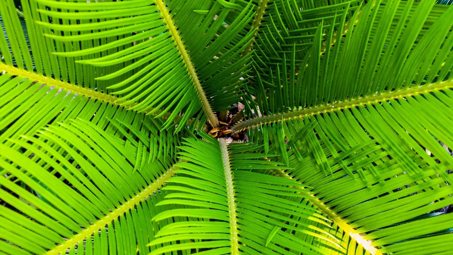 Tropical Leaf PC Wallpaper HD