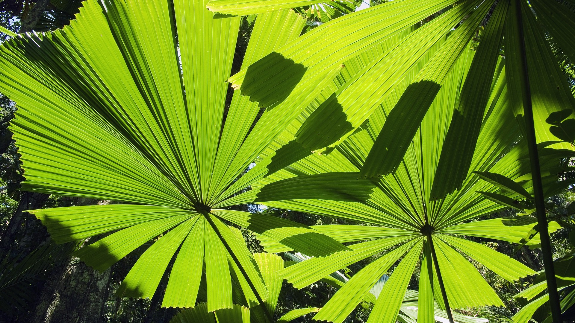 Tropical Leaf HD Wallpaper