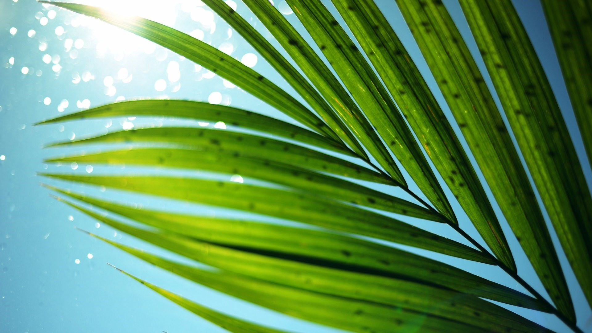 Tropical Leaf Wallpaper theme