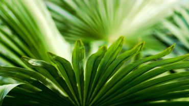 Tropical Leaf Picture