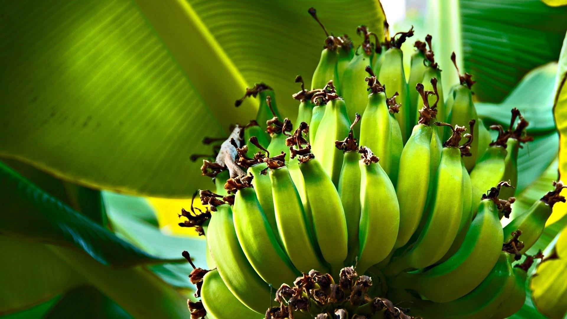 Banana Wallpaper for pc