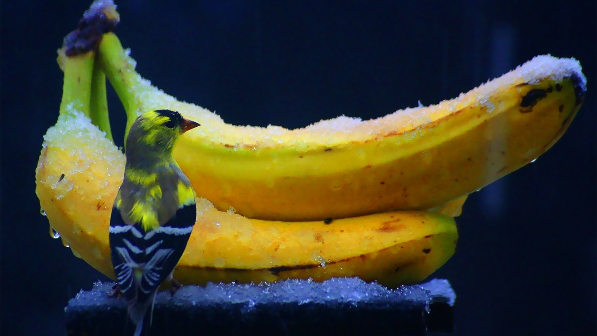 Banana Pic