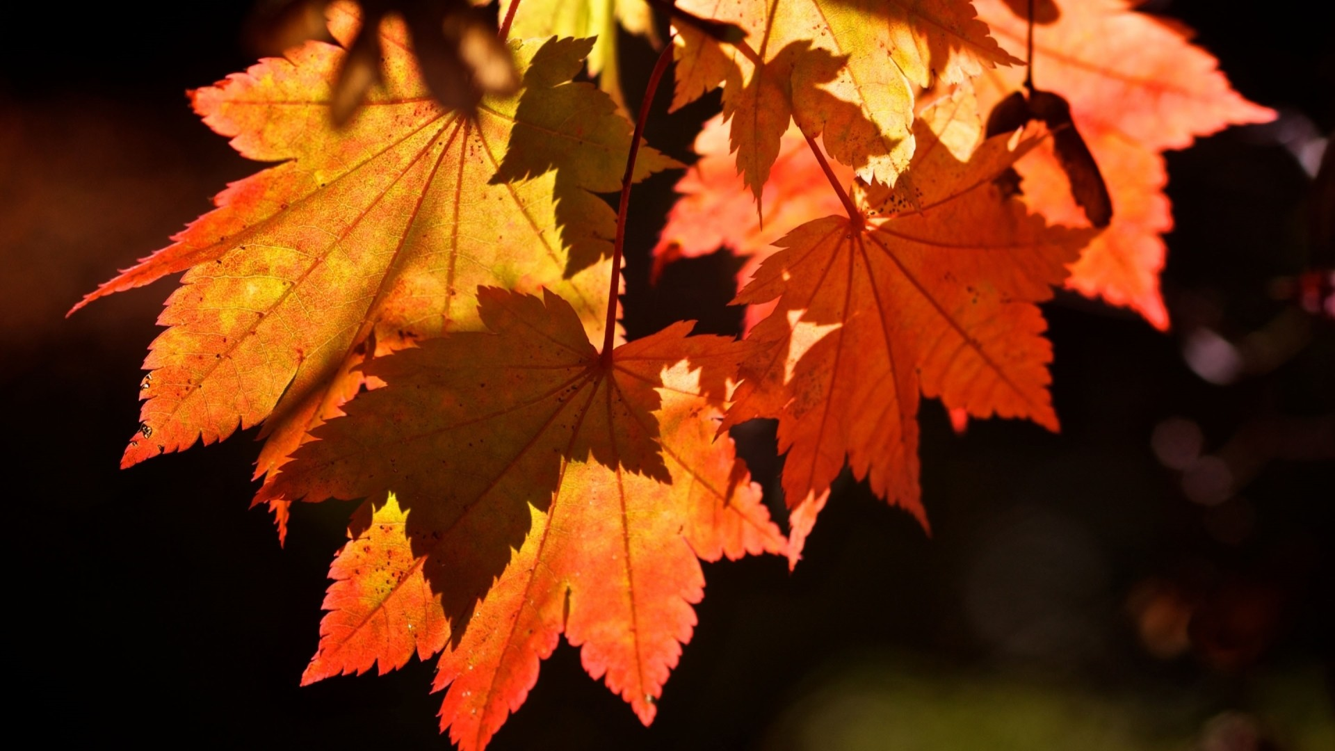 Fall Leaves HD Wallpaper