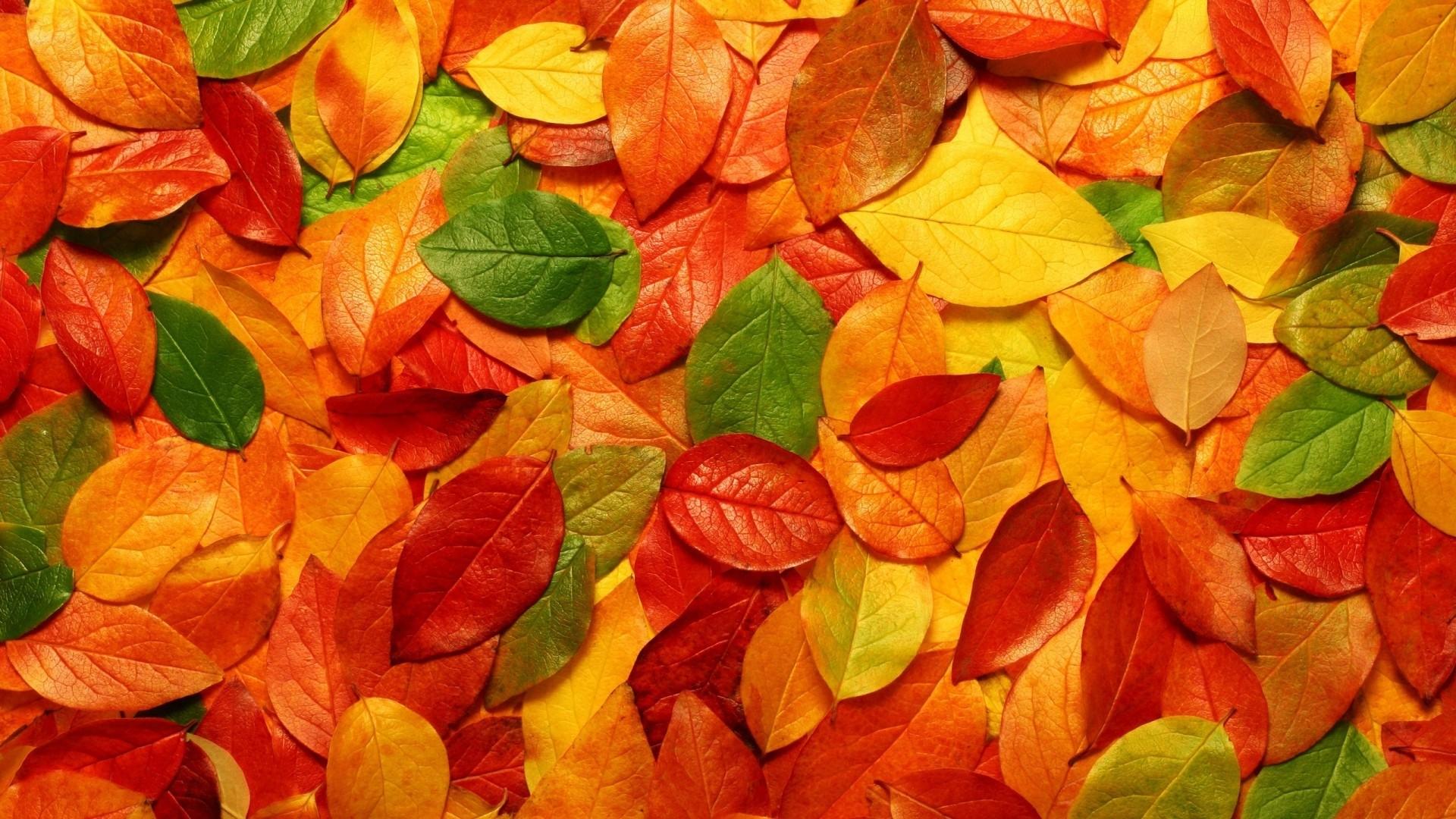 Fall Leaves Wallpaper theme