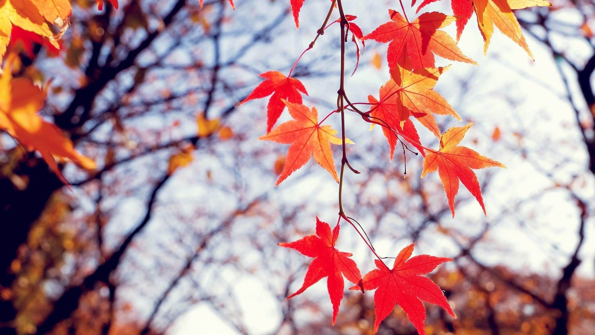 Fall Leaves Wallpaper Picture hd