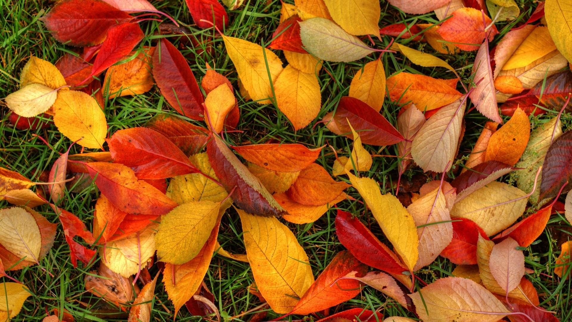 Fall Leaves High Quality
