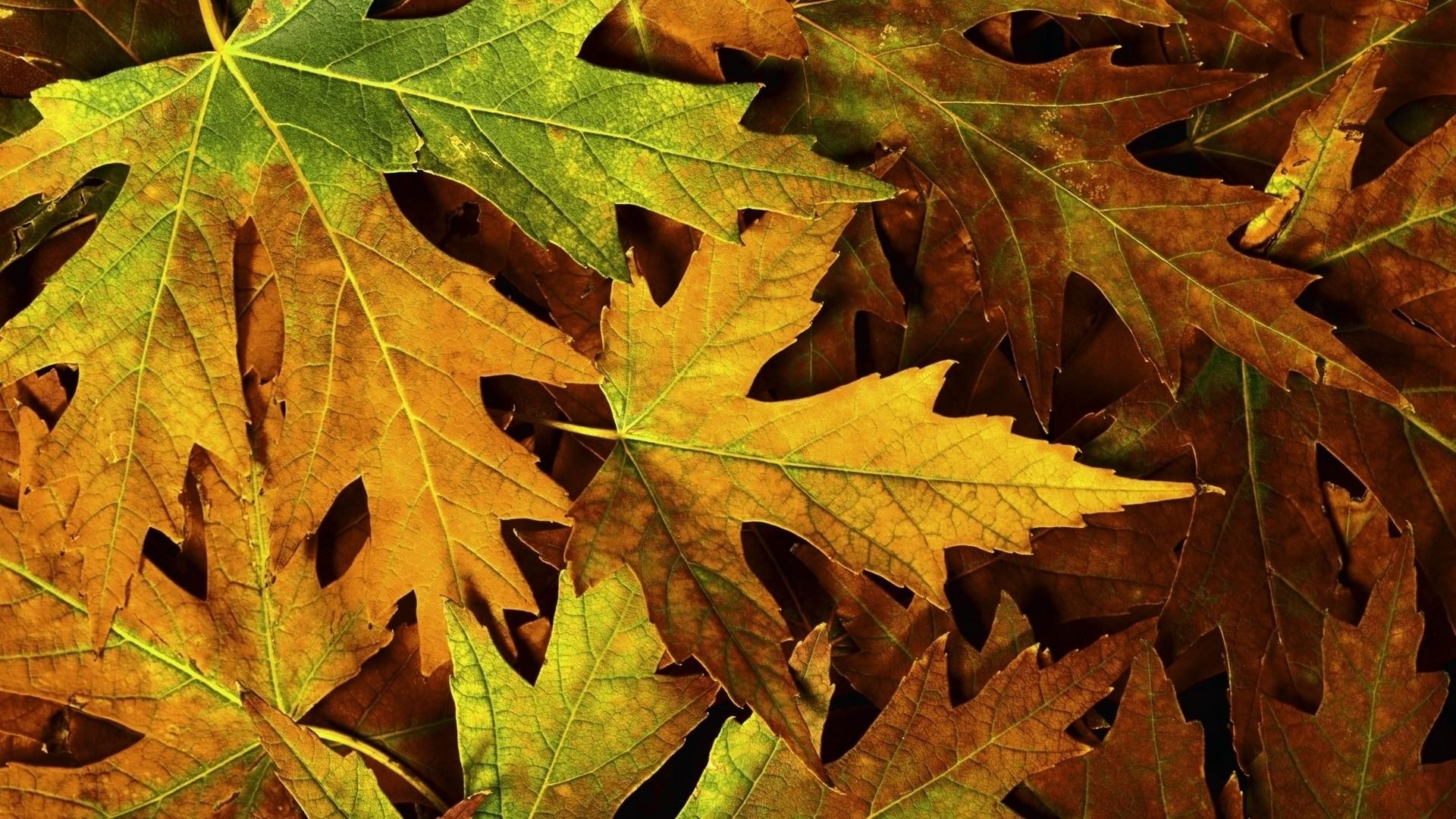 Fall Leaves Image