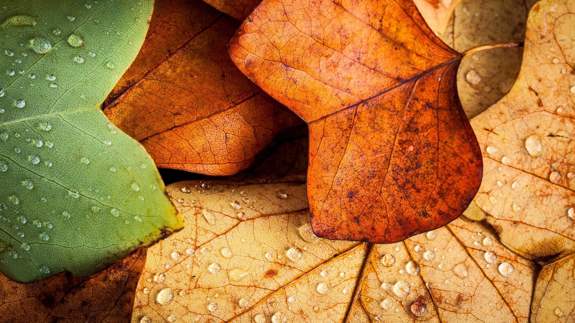 Fall Leaves wallpaper photo hd