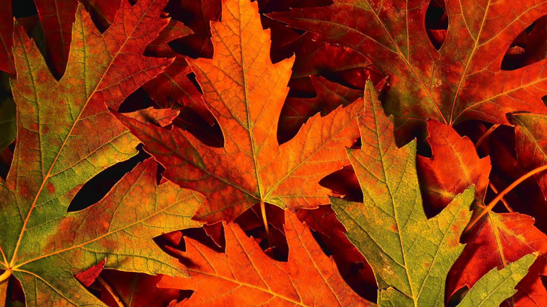 Fall Leaves PC Wallpaper HD