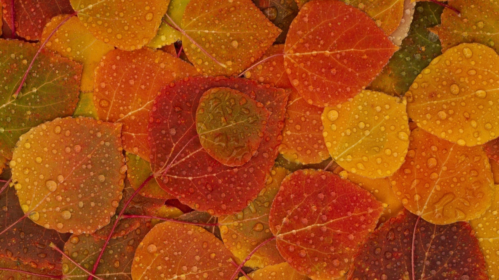 Fall Leaves hd desktop wallpaper
