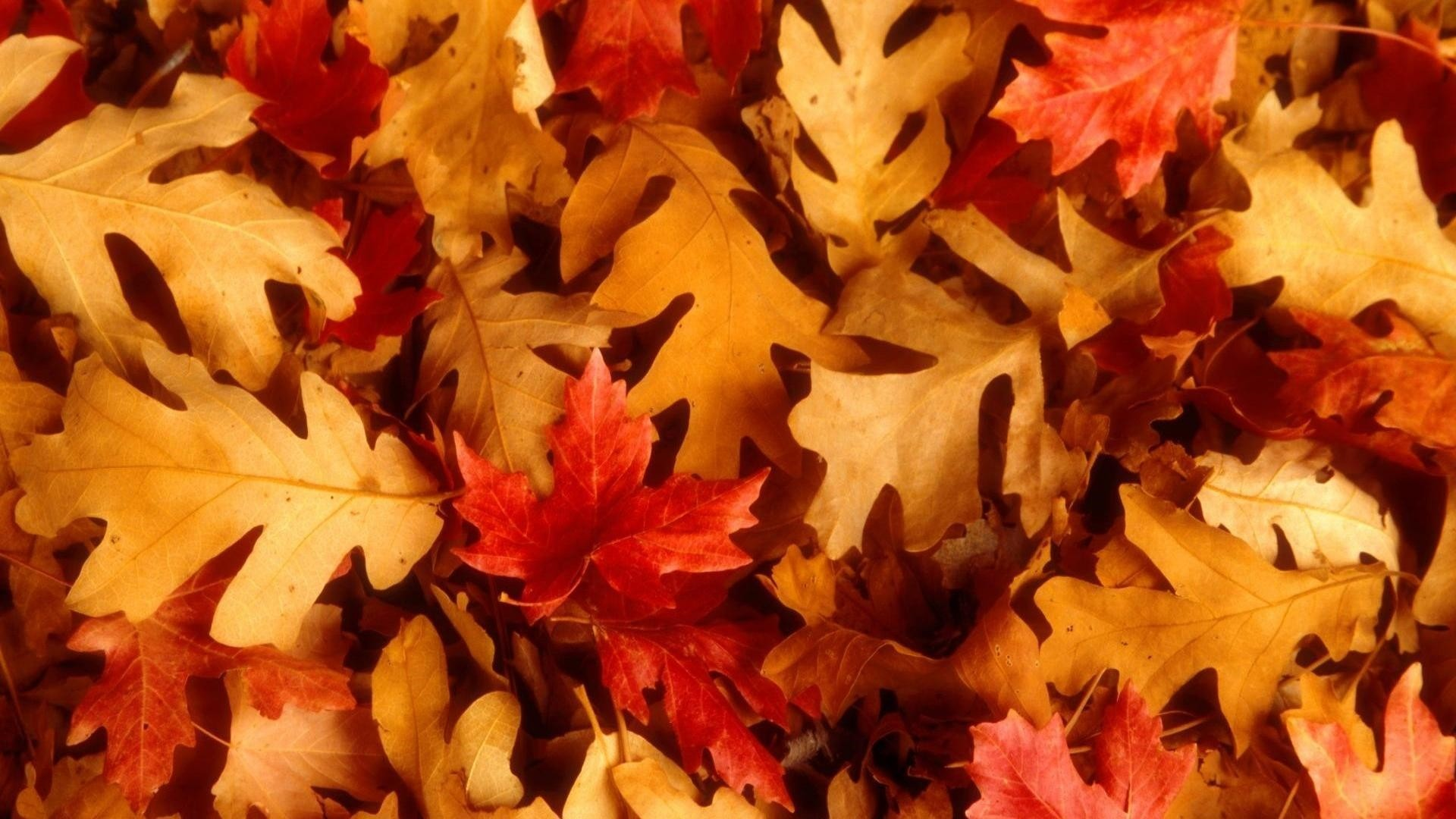 Fall Leaves Wallpaper image hd