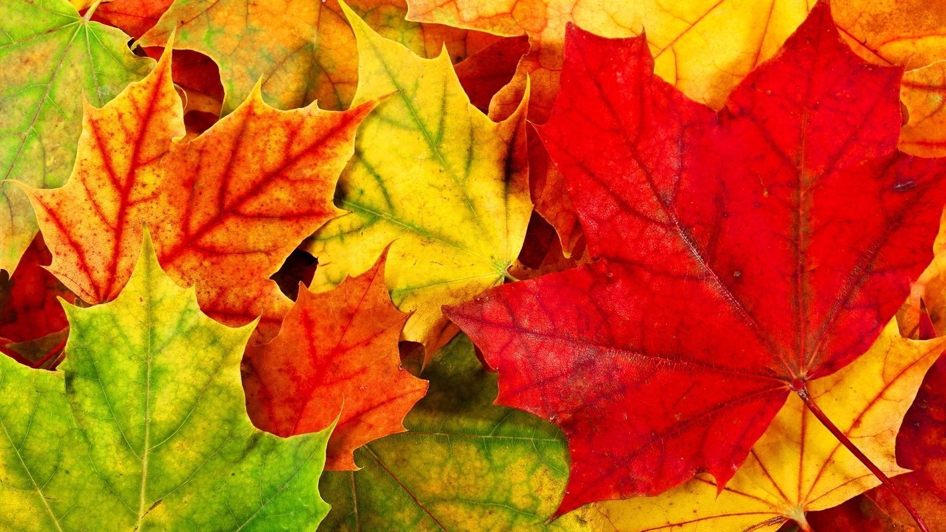 Fall Leaves Download Wallpaper