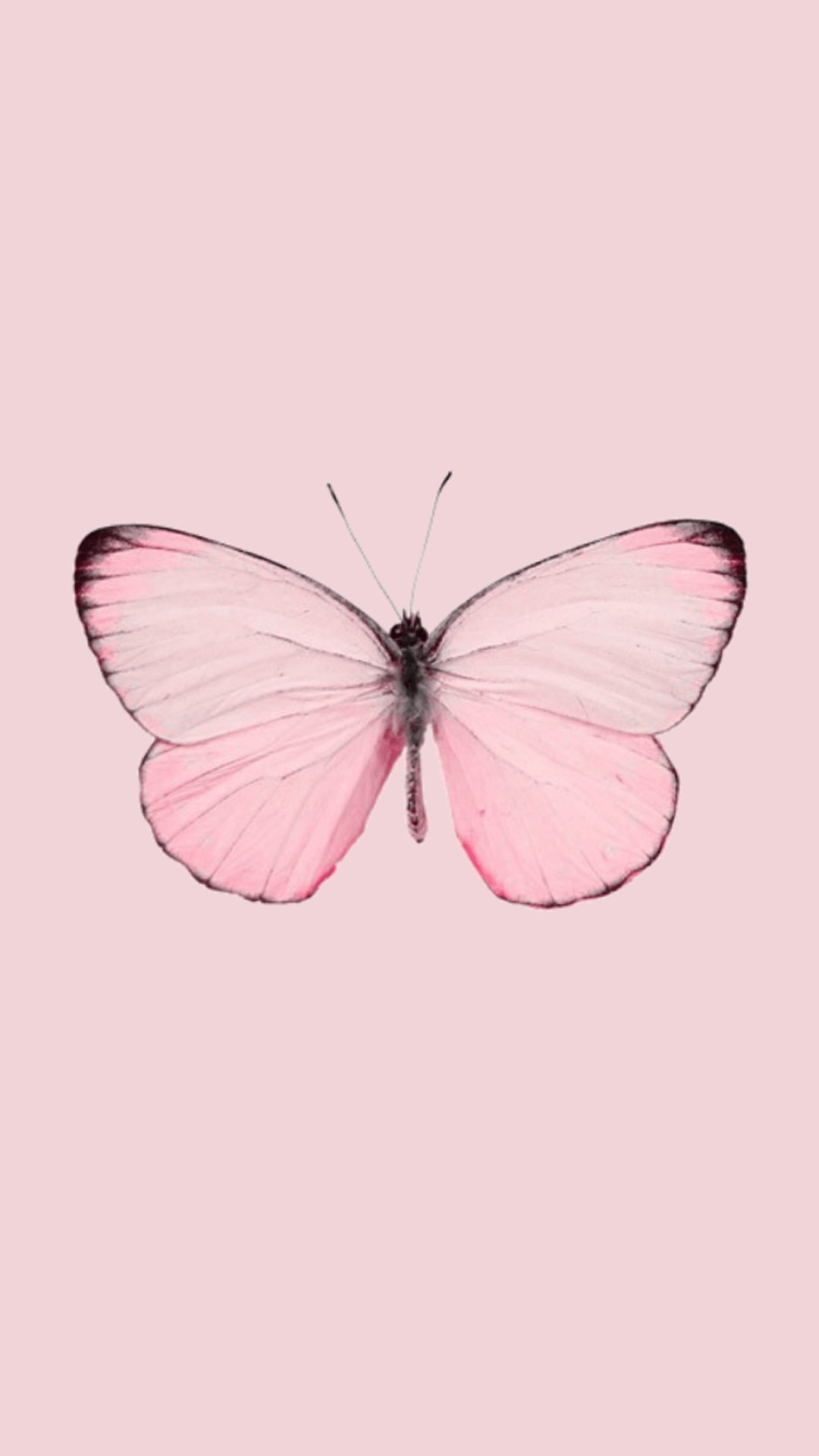 Aesthetic Butterfly iphone home screen wallpaper