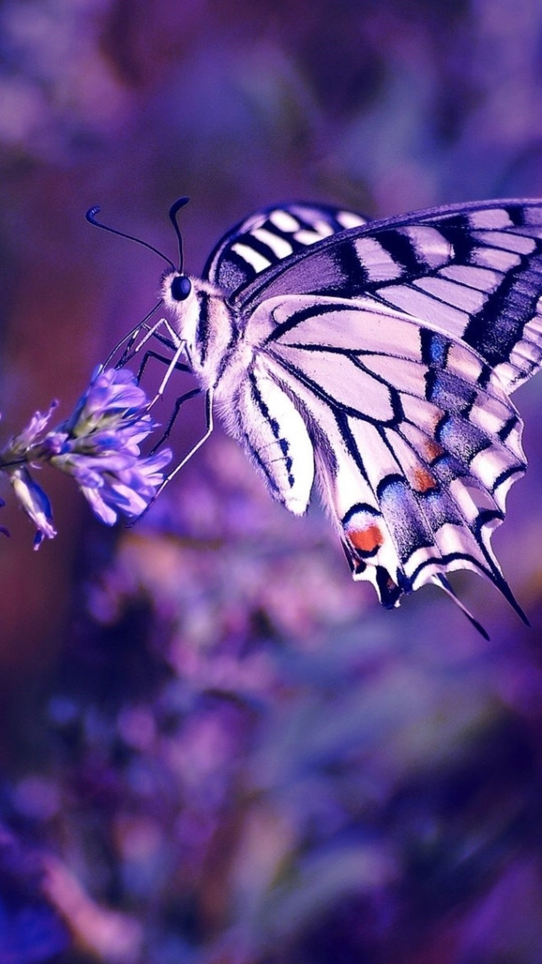 Aesthetic Butterfly hd wallpaper for iphone
