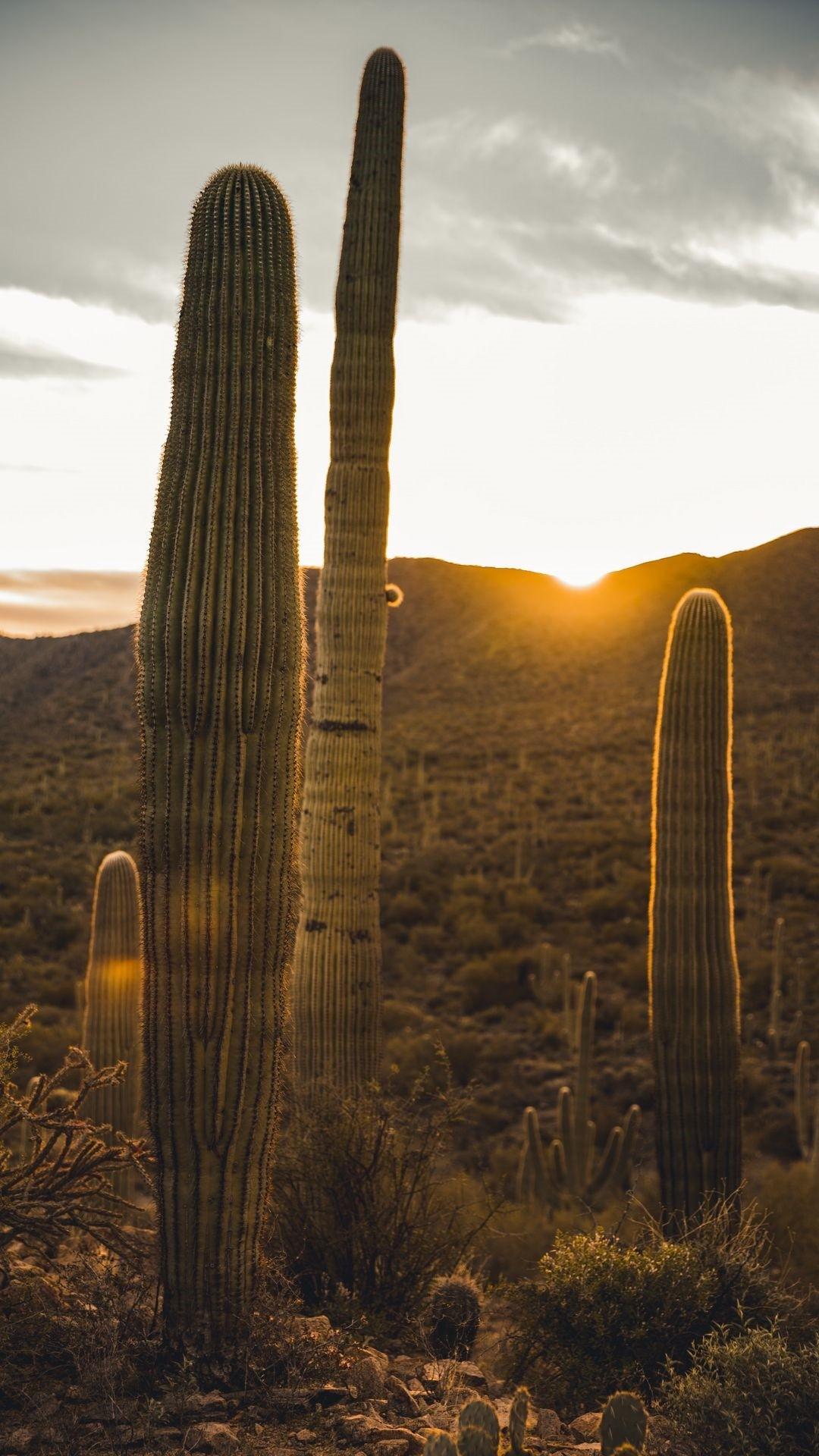 Cactus lock screen wallpaper