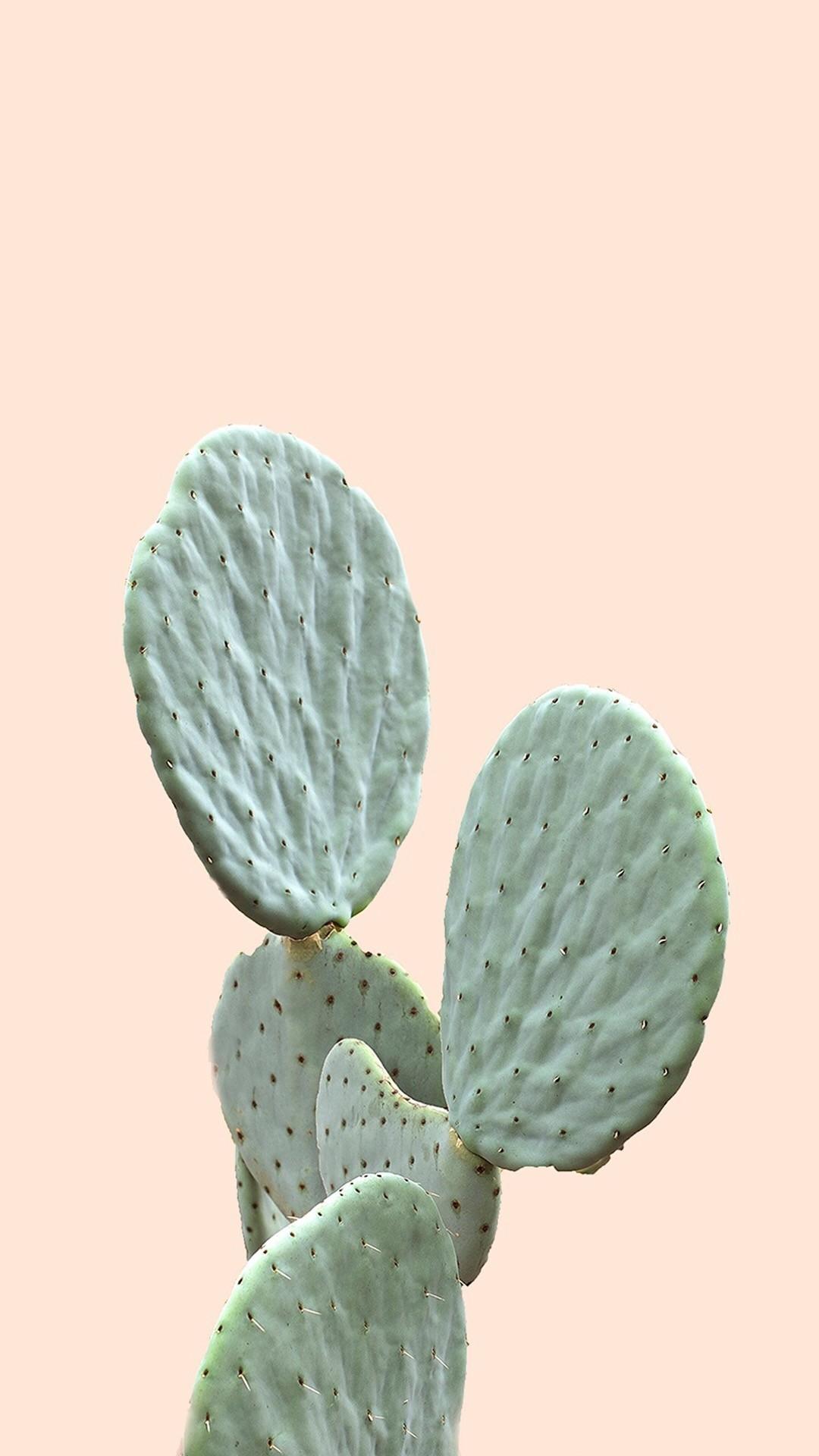 Cactus iphone 5 wallpaper
