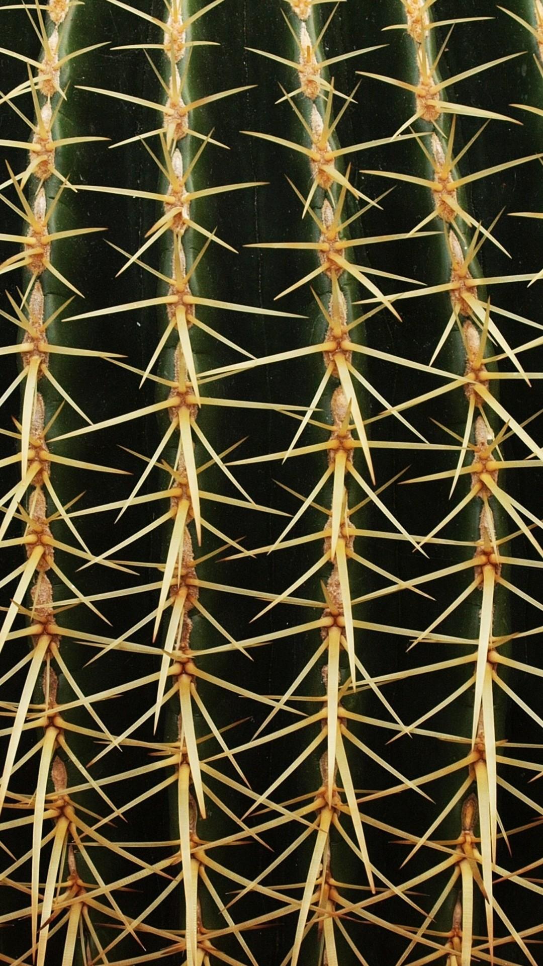 Cactus iphone 8 plus wallpaper