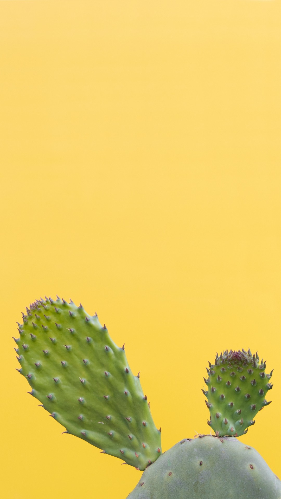 Cactus hd wallpaper for mobile