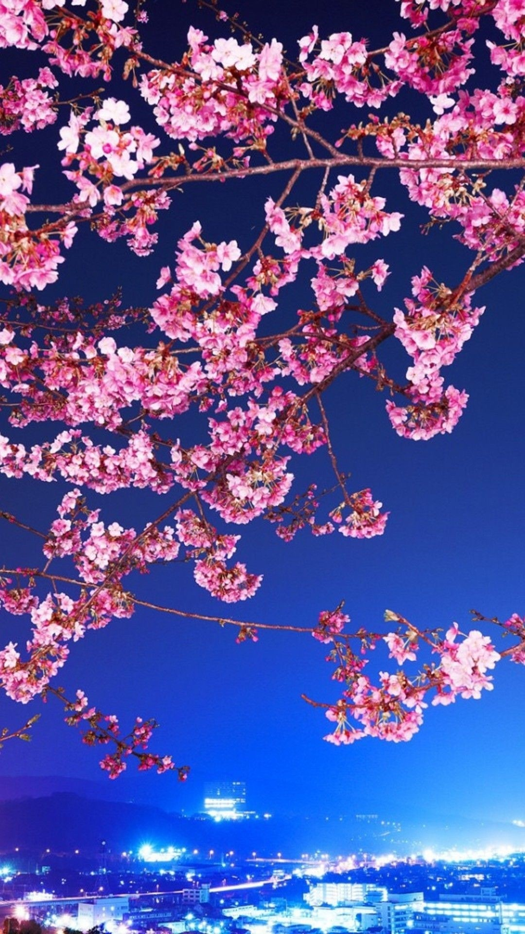 Cherry Blossom iphone wallpaper high quality