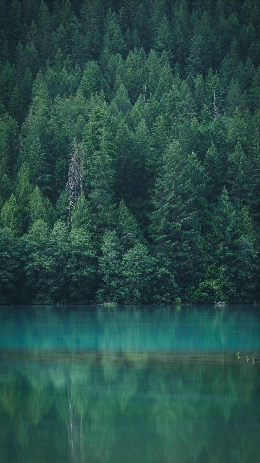 Forest screensaver wallpaper