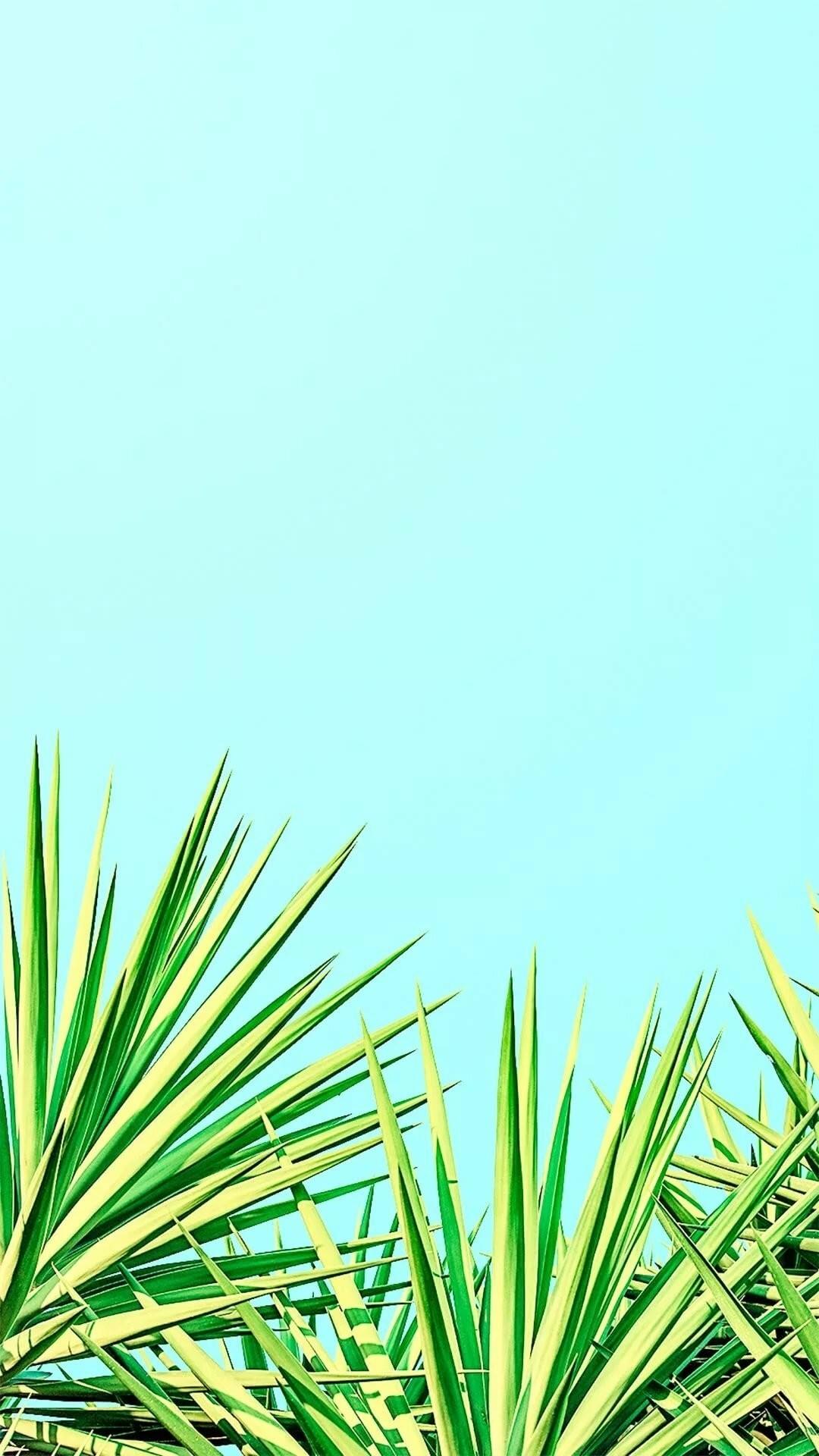 Summer iphone 8 wallpaper