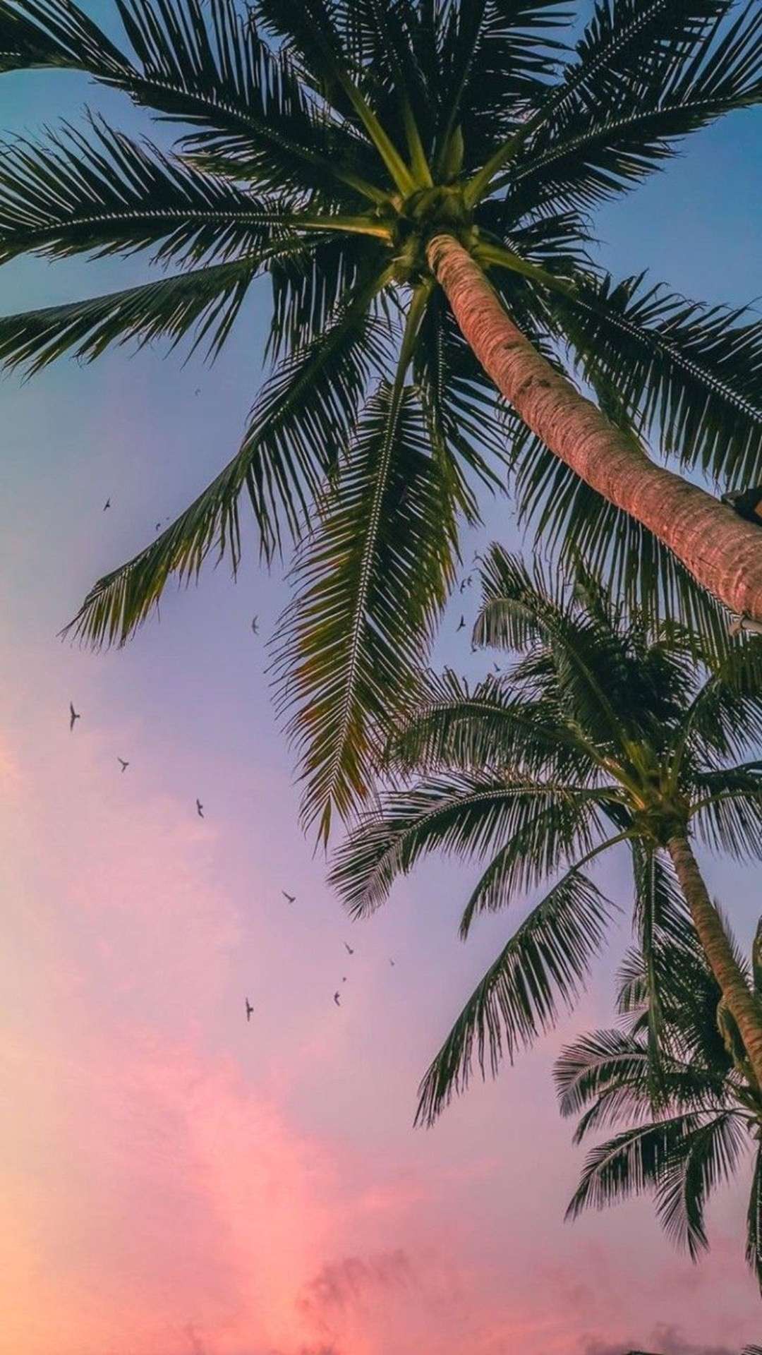 Summer free wallpaper for android