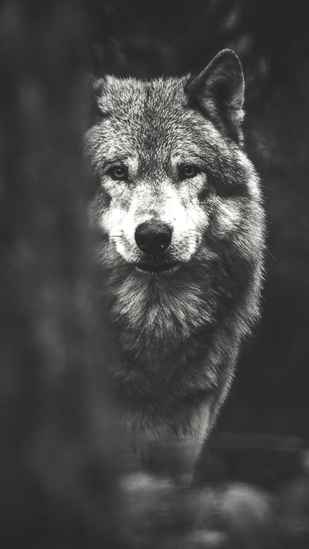 Wolf iphone home screen wallpaper