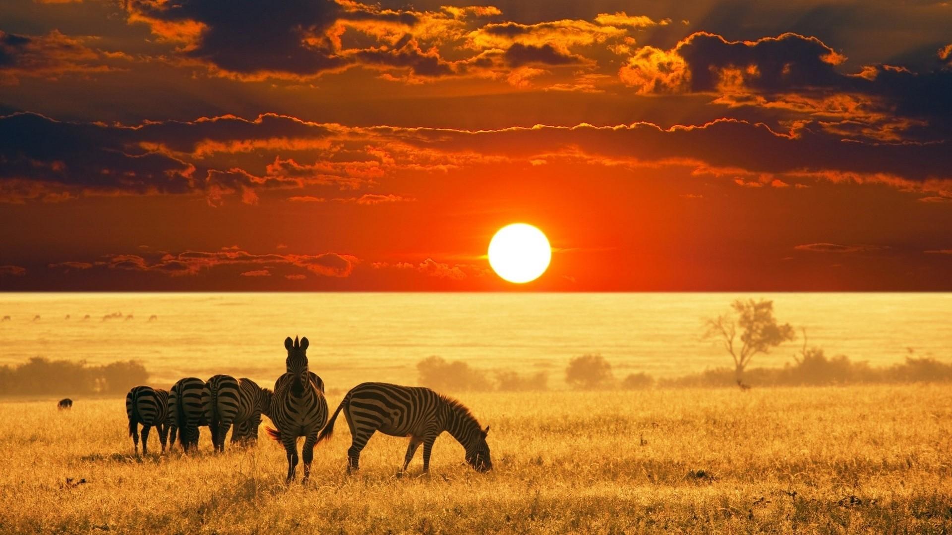 Africa hd wallpaper download