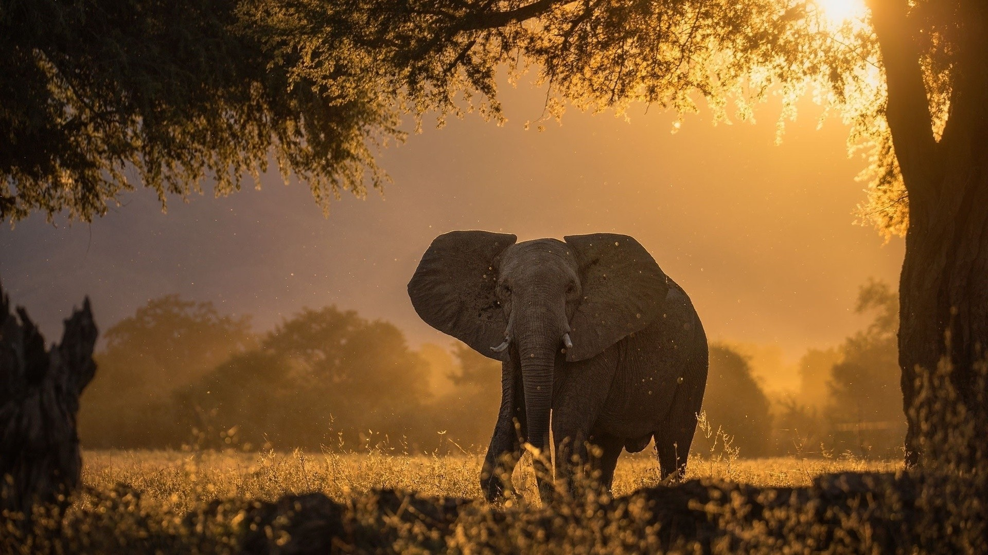 Africa Wallpaper image hd