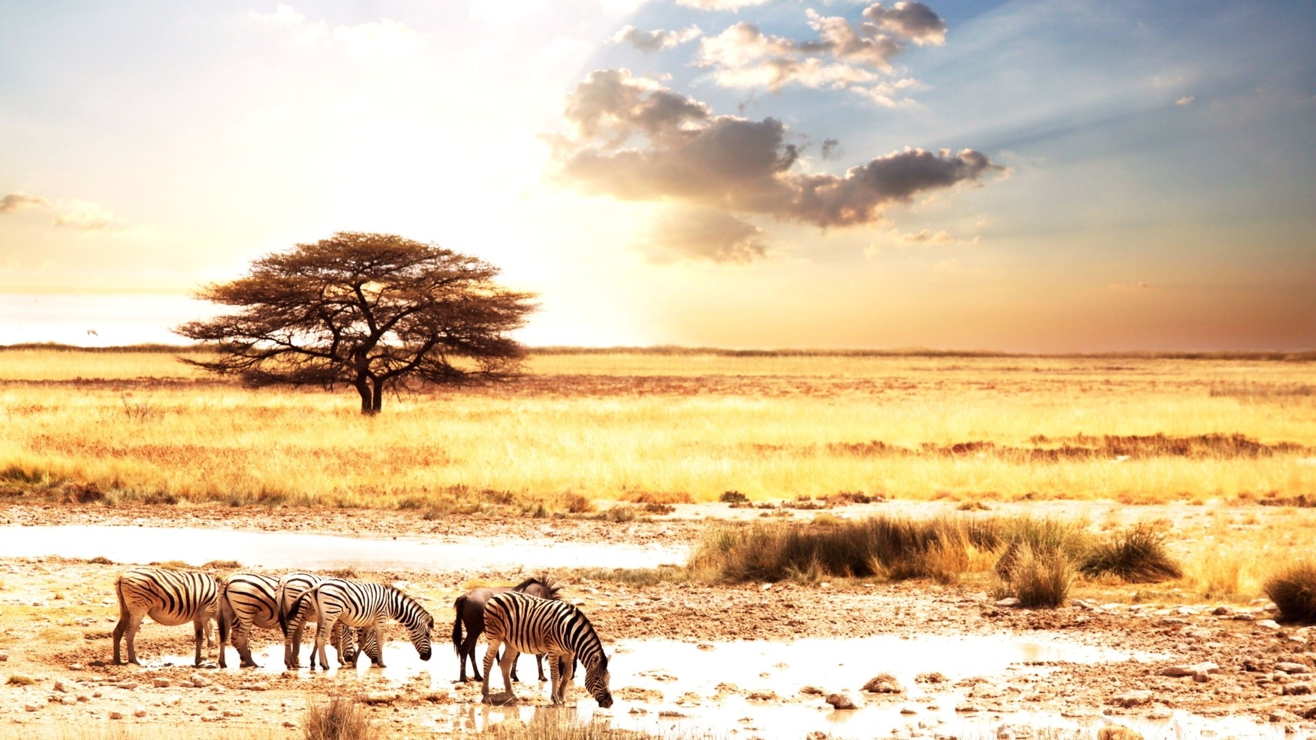 Africa Wallpaper Picture hd