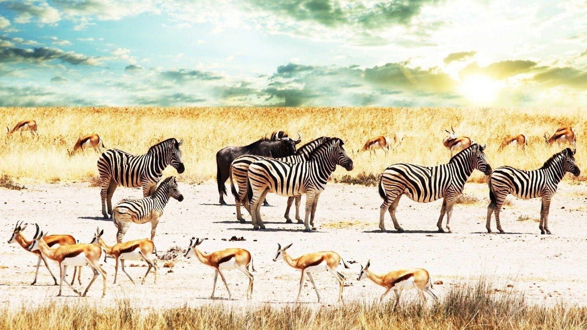 Africa a wallpaper