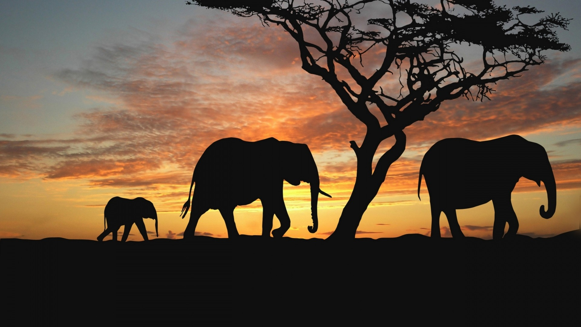 Africa Wallpaper and Background