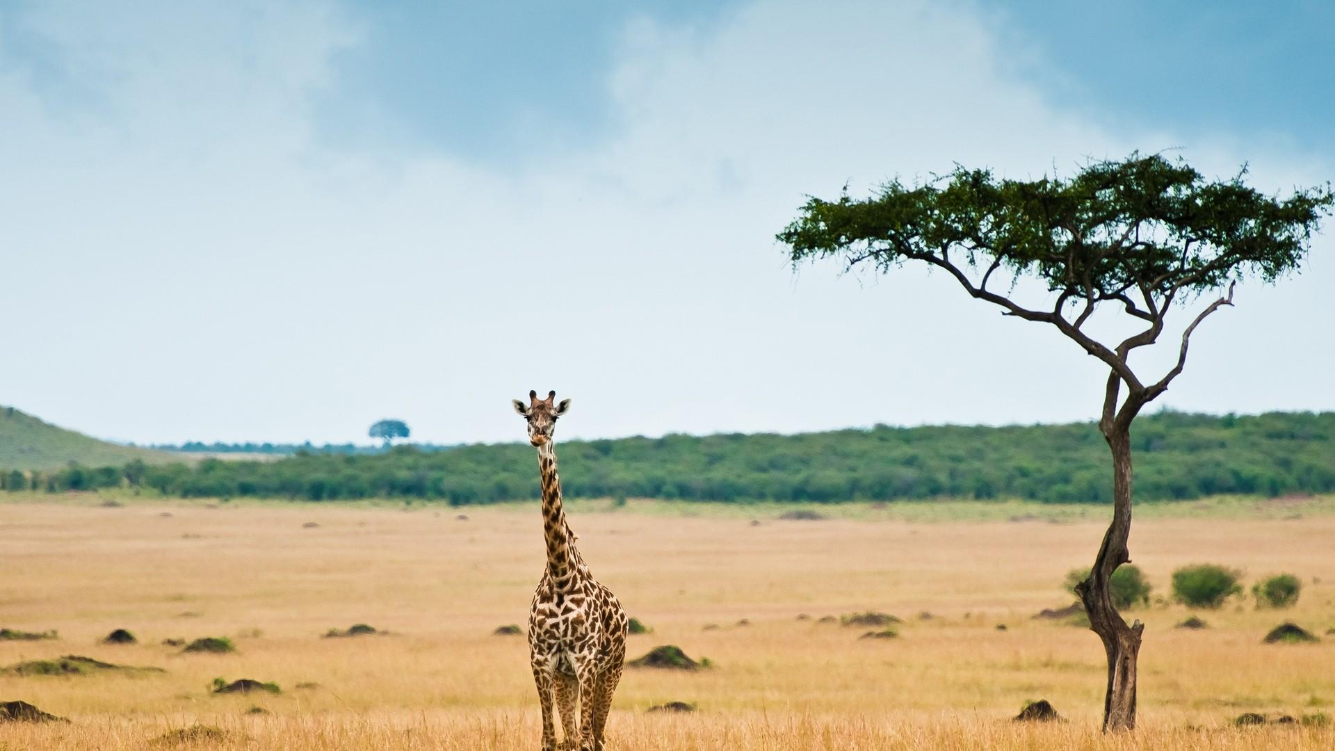 Africa Background Wallpaper