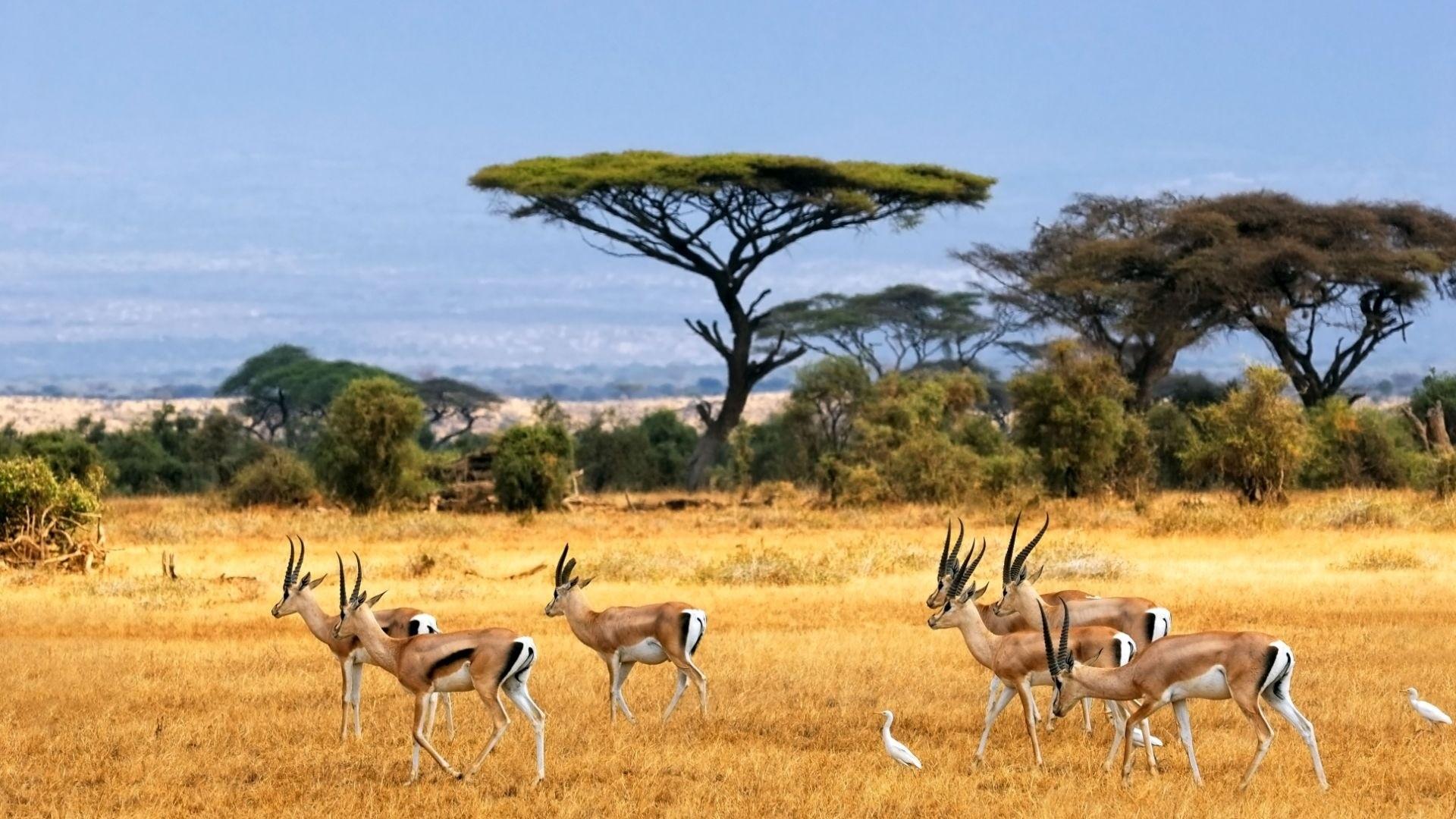 Africa wallpaper photo hd