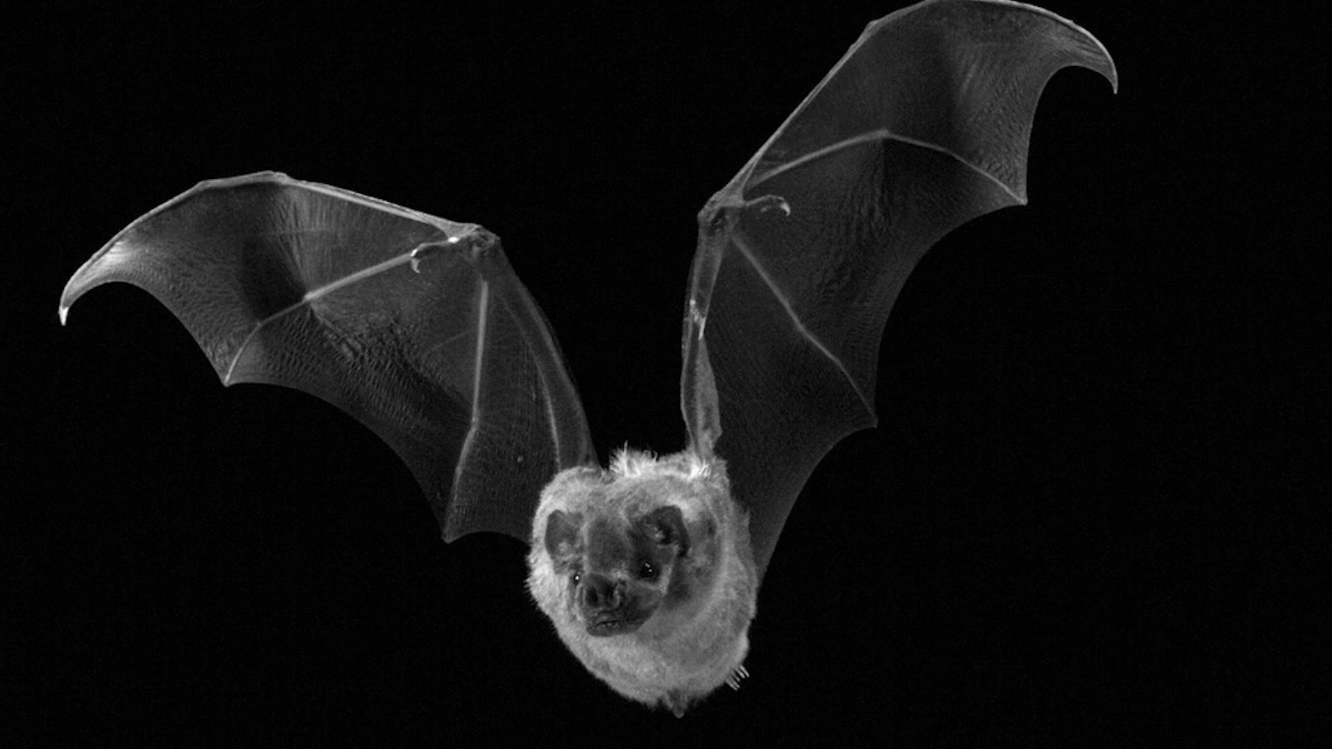 Bat Pic
