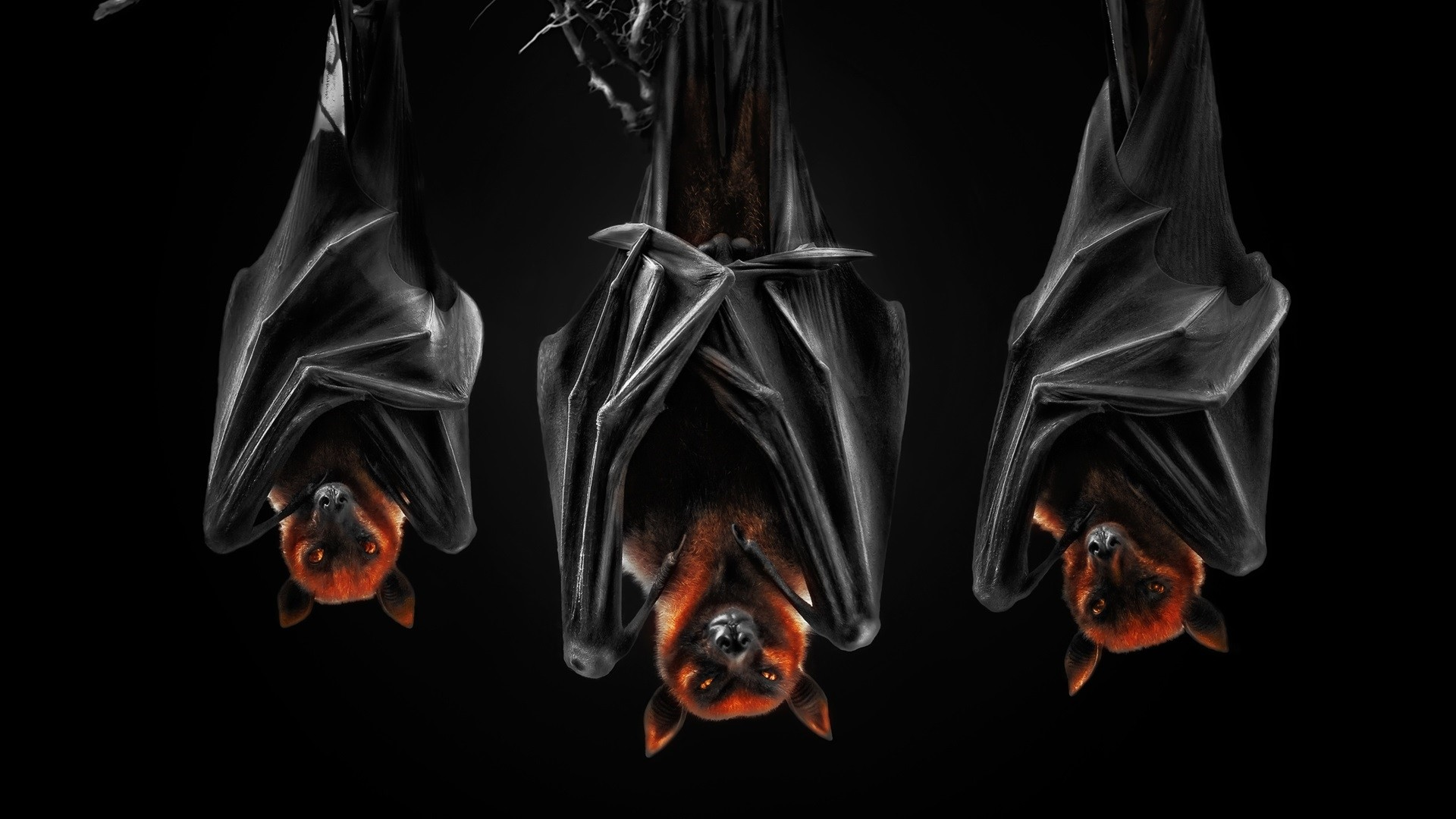 Bat Wallpaper image hd