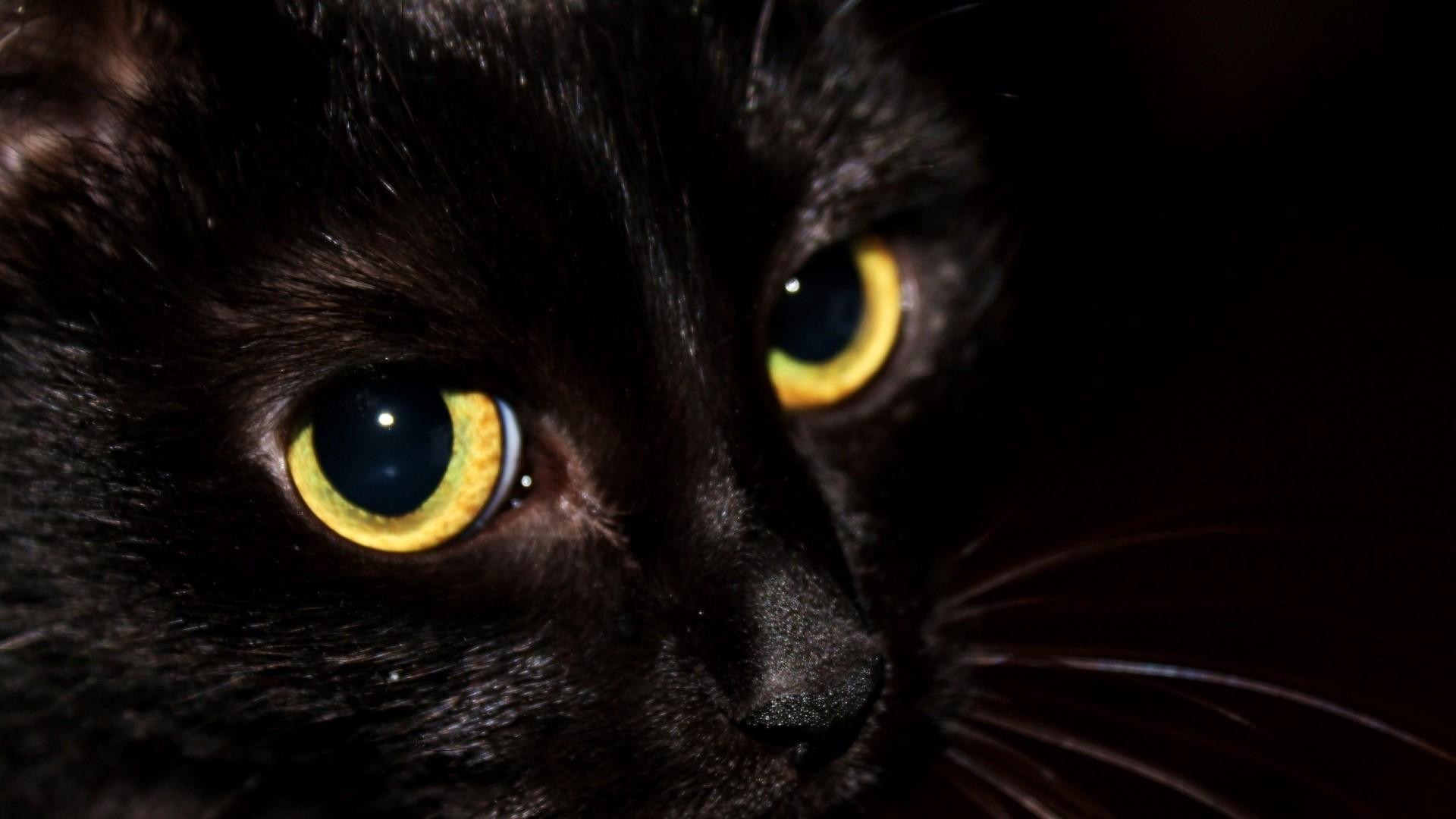 Black Cat Wallpaper Picture hd