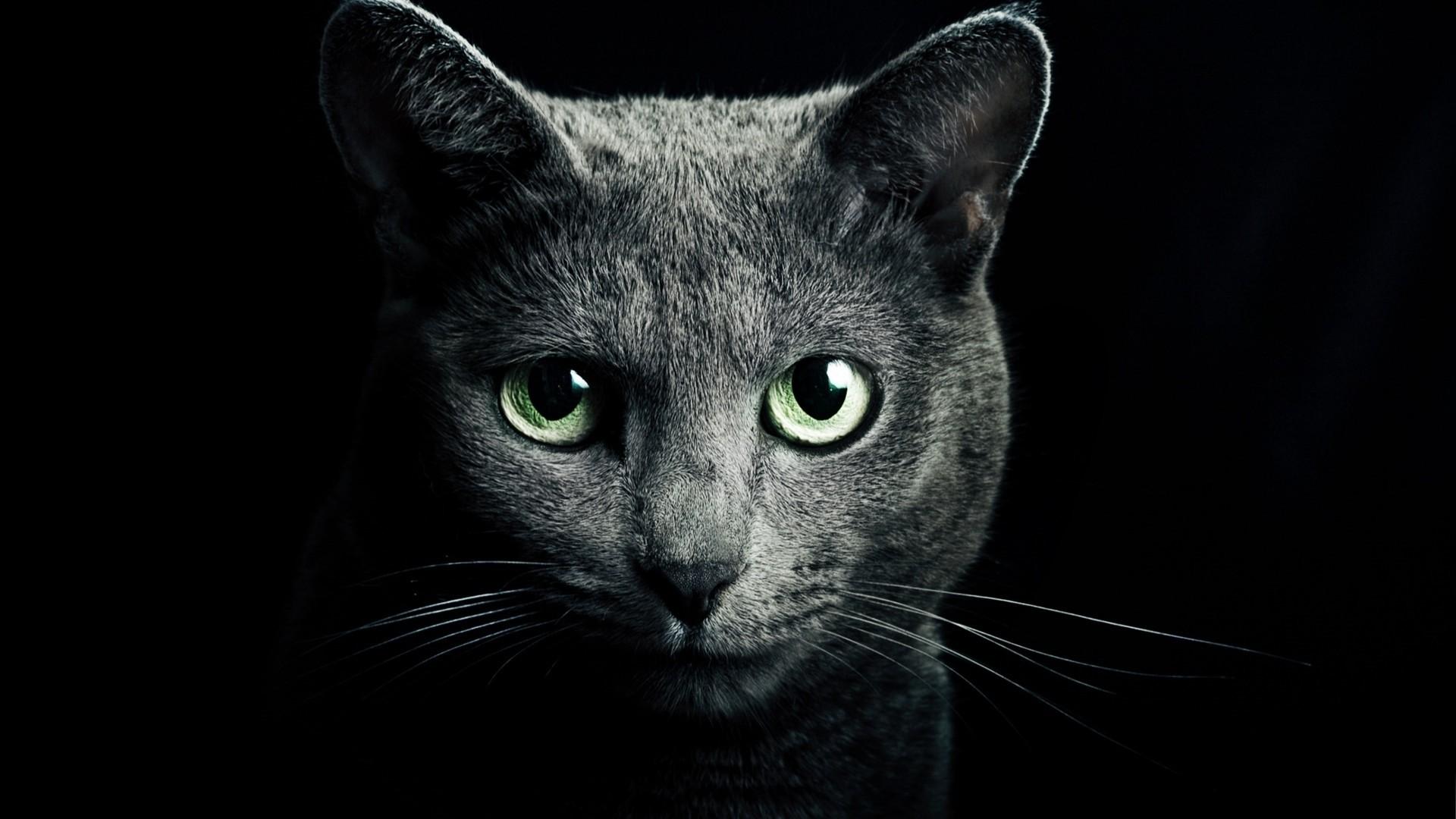 Black Cat HD Download