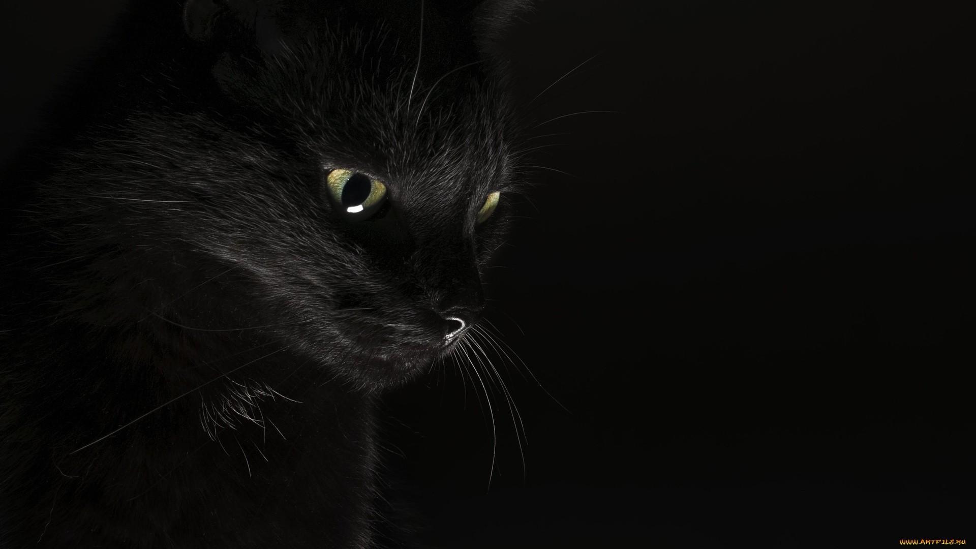 Black Cat Wallpaper theme