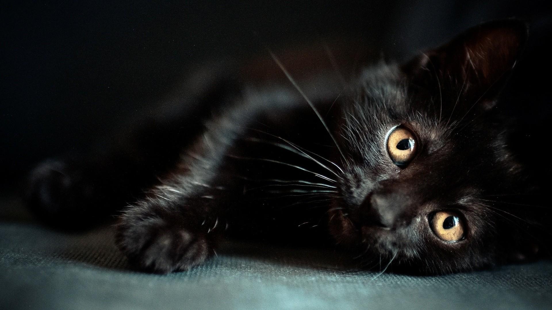 Black Cat HD Wallpaper