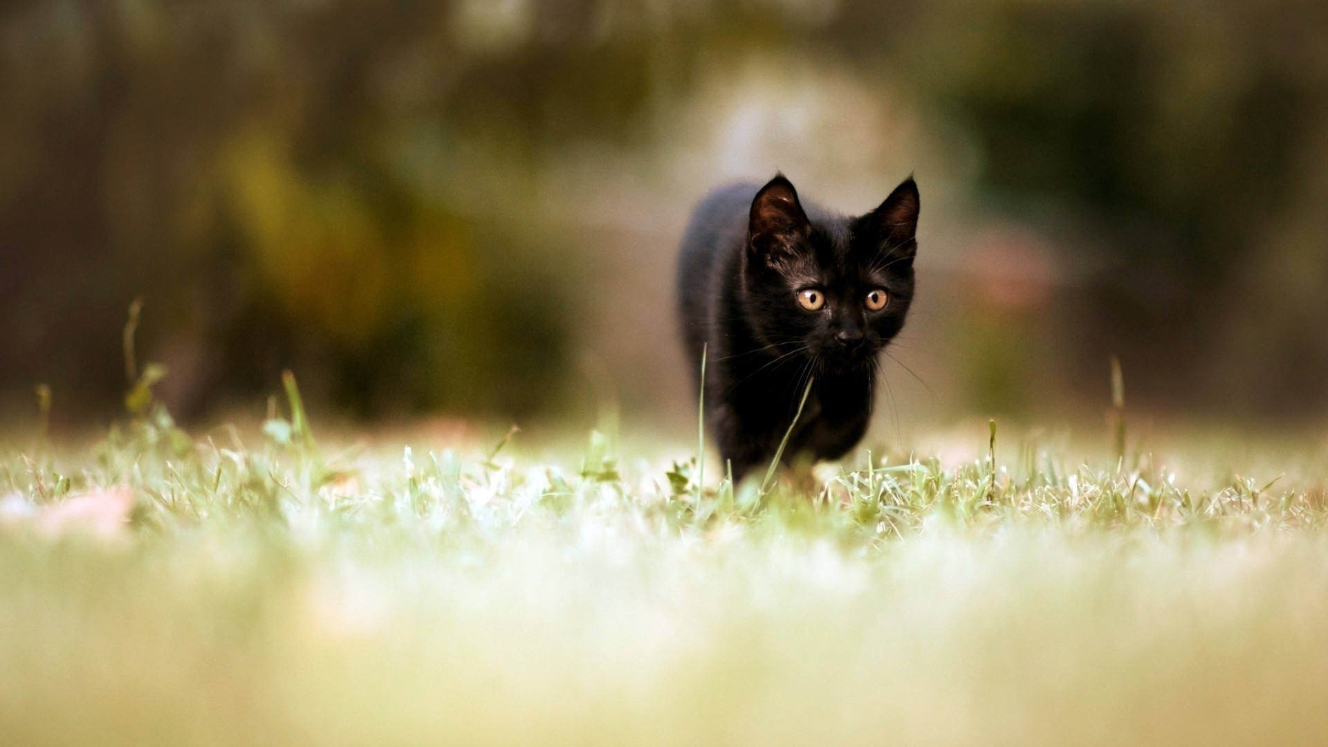 Black Cat Free Wallpaper and Background