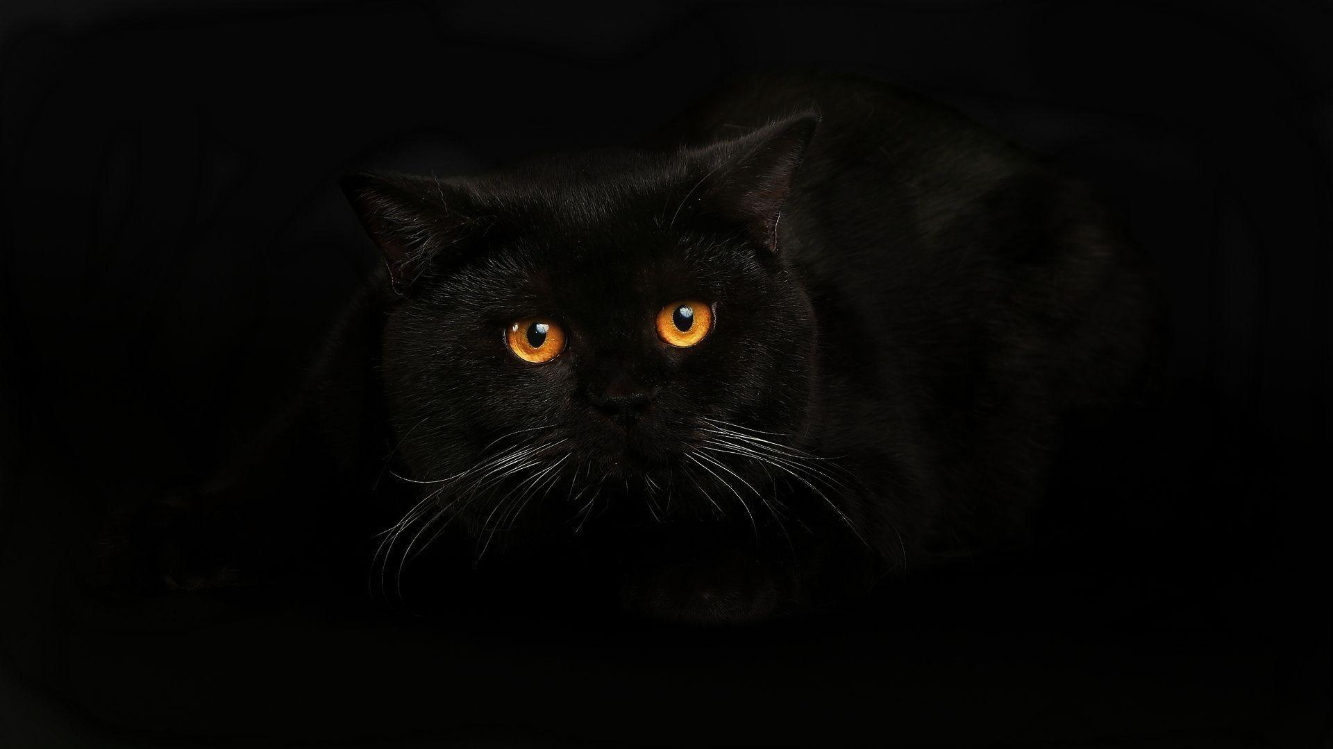 Black Cat Pic
