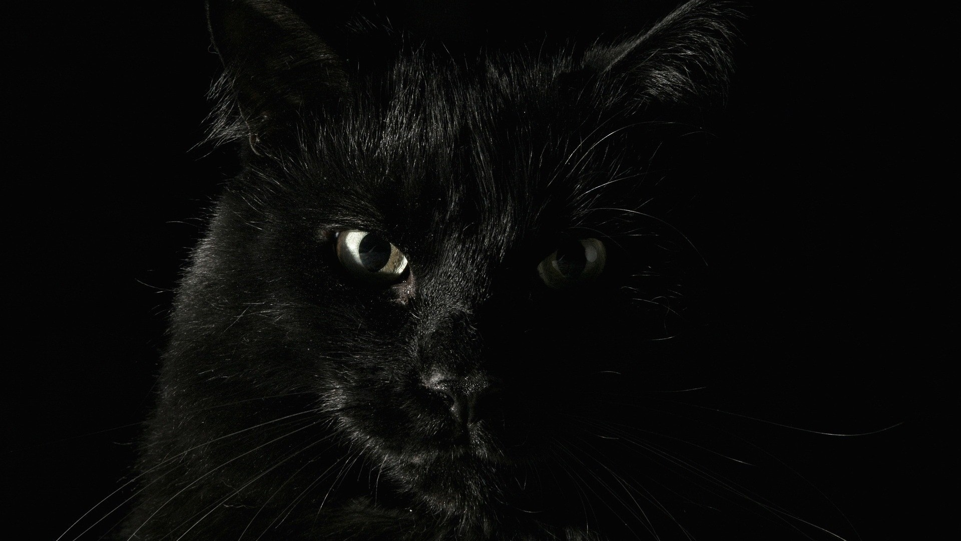Black Cat PC Wallpaper