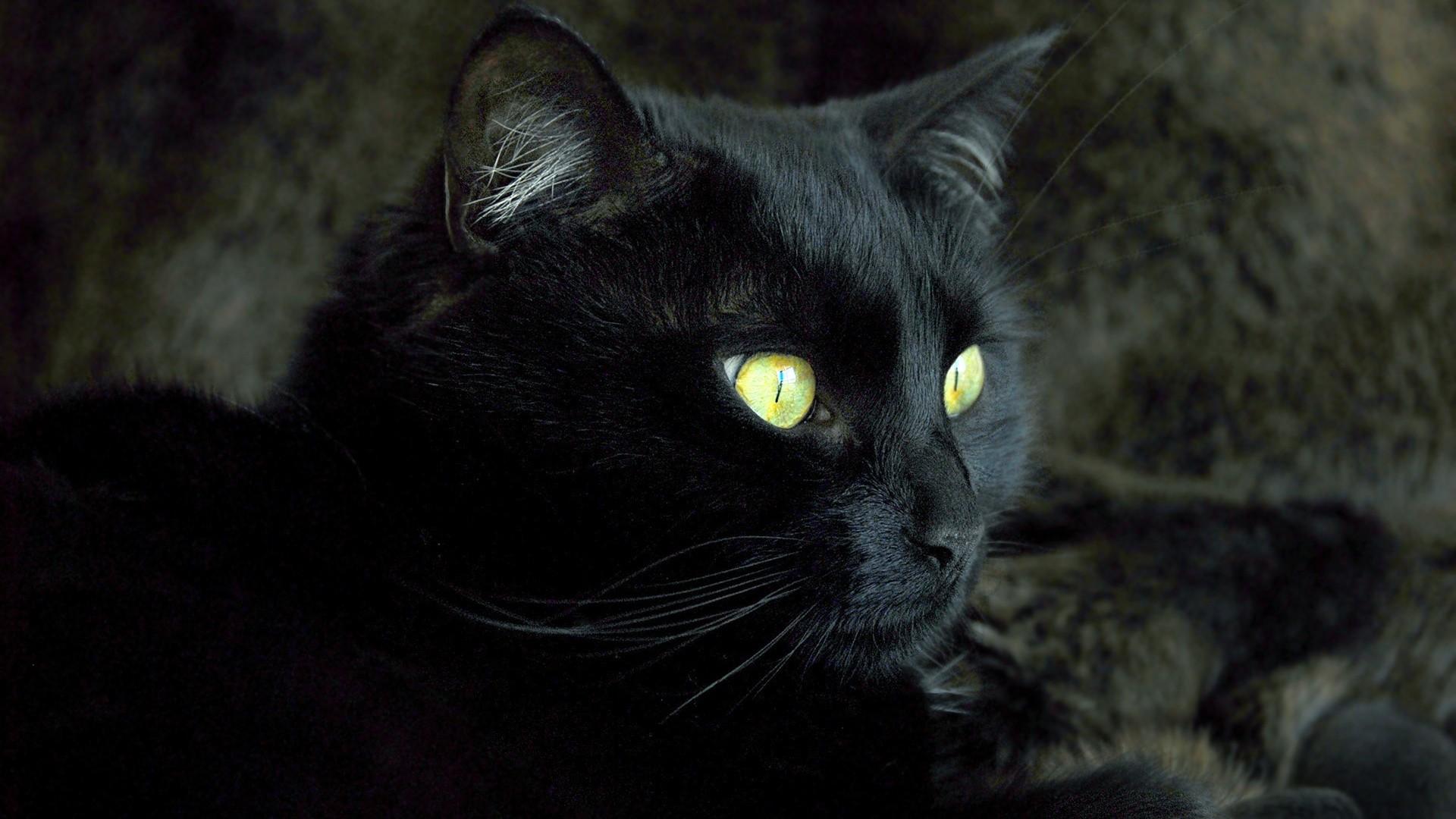 Black Cat Wallpaper for pc