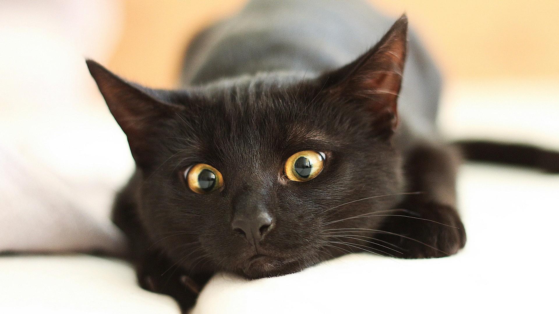 Black Cat Download Wallpaper