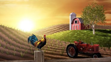 Farm HD Wallpaper