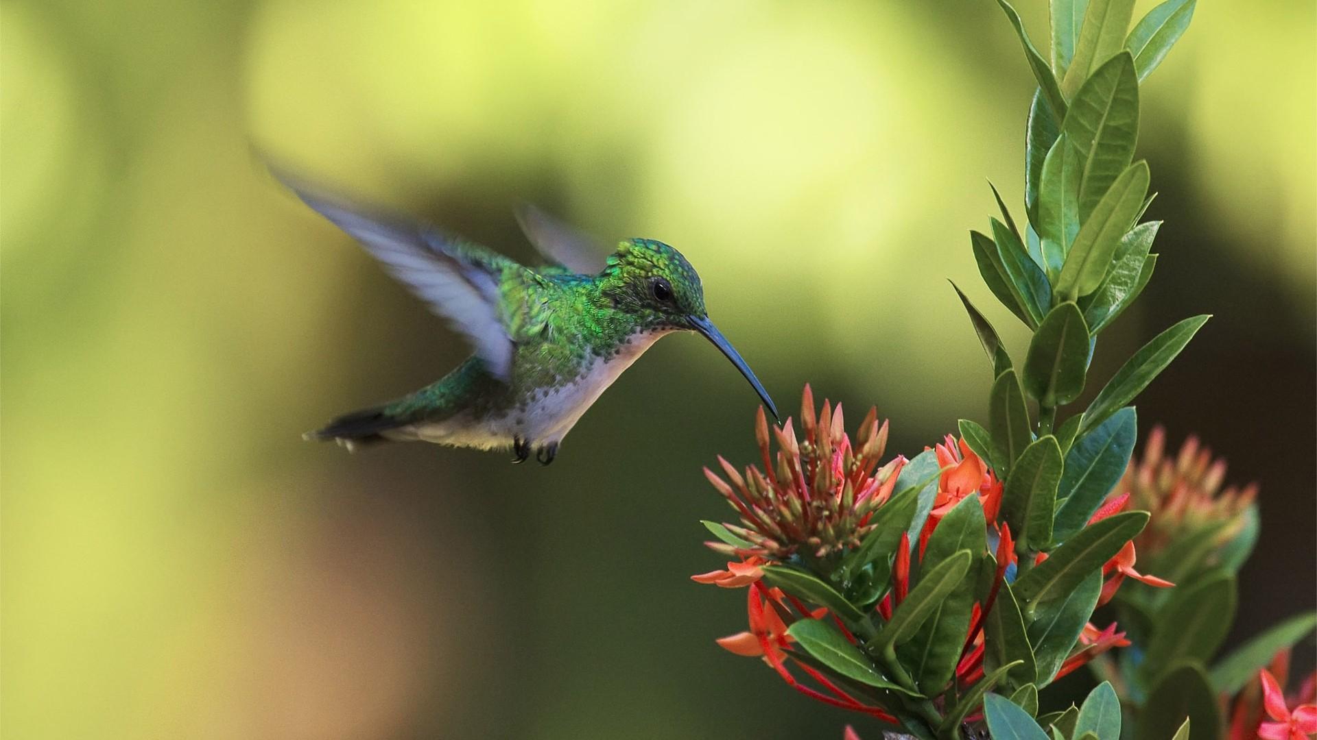 Hummingbird wallpaper photo hd