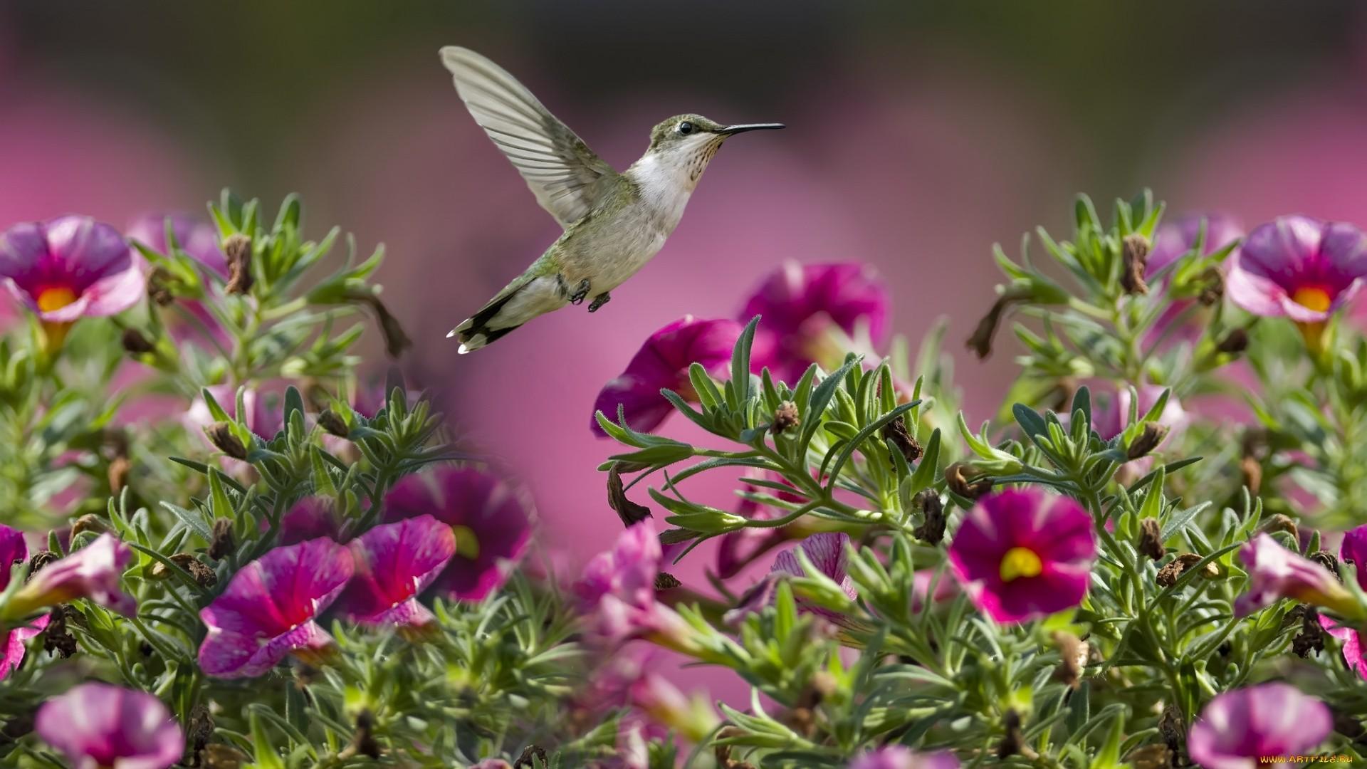 Hummingbird Wallpaper theme